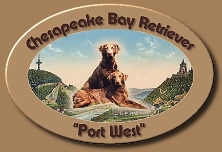 "Chesapeake Bay Retriever ""Port West"""